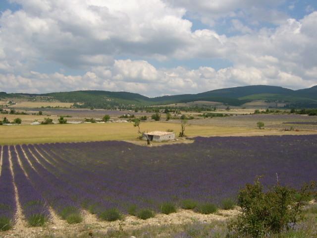南仏プロバンスの無農薬・有機栽培のラベンダー畑